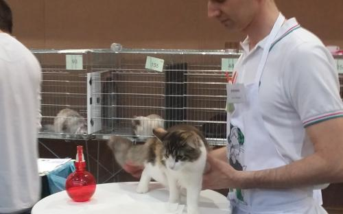 Ljubljana International Cat Show 2014 10