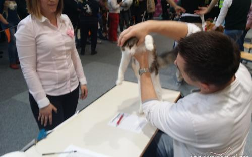 Ljubljana International Cat Show 2014 5