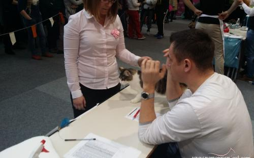 Ljubljana International Cat Show 2014 7