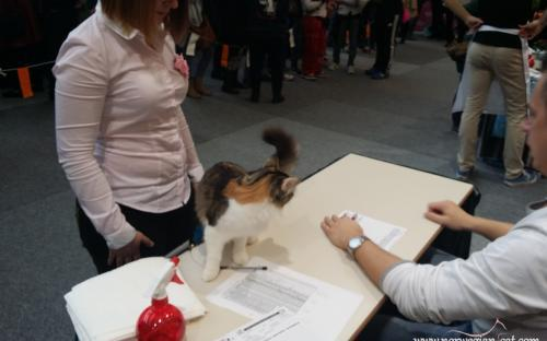 Ljubljana International Cat Show 2014 8