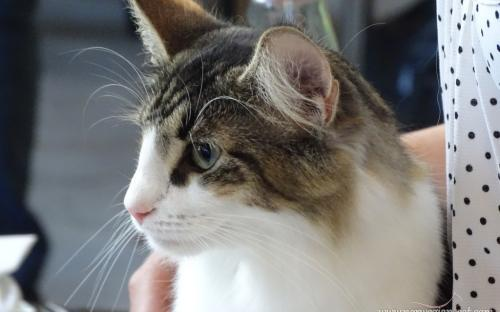Trieste International Cat Show September 2014 1
