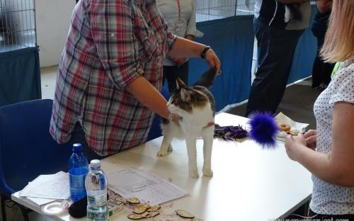 Trieste International Cat Show September 2014 9