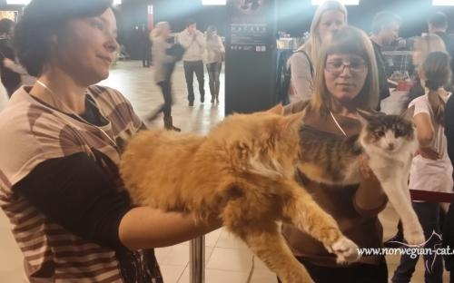 Zagreb International Cat Show Marc 2014 2