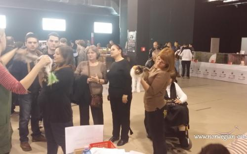 Zagreb International Cat Show Marc 2014 3