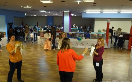 Zagreb International Cat Show September 2014 10