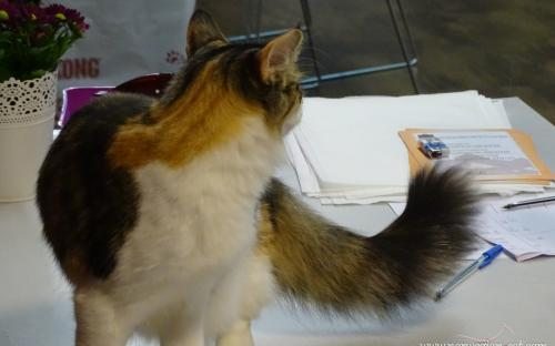 Zagreb International Cat Show September 2014 7